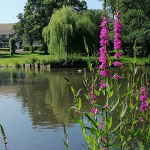 Ballard Water Meadow