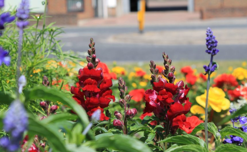 New Milton In Bloom 2019