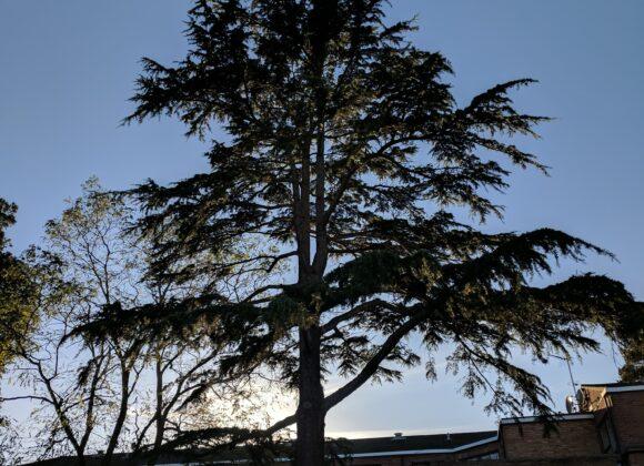 Plant a Tree Initiative