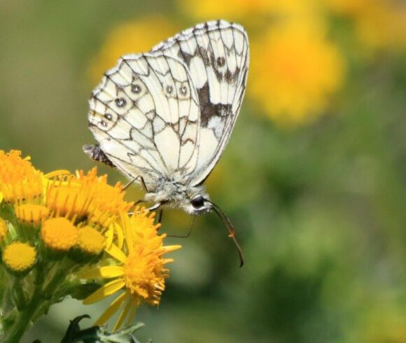 Biodiversity & SINCs