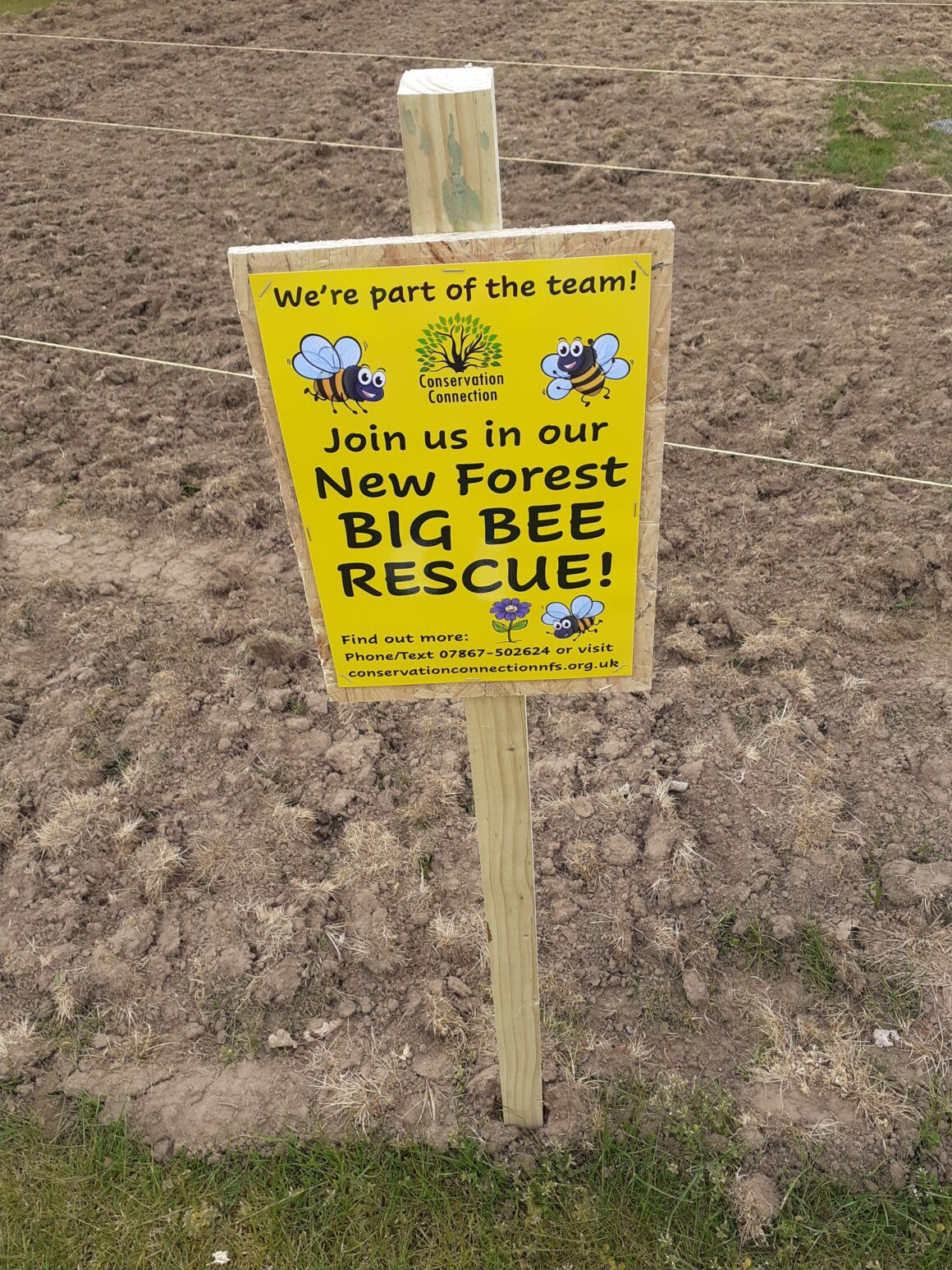 NEW MILTON'S BIG BEE RESCUE